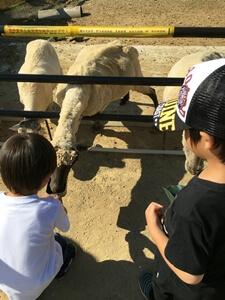 堺・緑のミュージアムハーベストの丘では、柵があるので子供も安心して餌やりがができます。