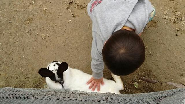 ハーベストの丘では動物に餌やりができます。柵もあるので安心して餌やりができます。