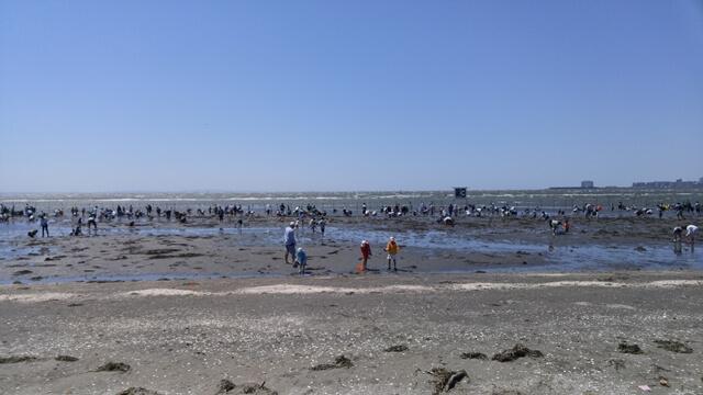 ふなばし三番瀬海浜公園へ潮干狩りに行ってきました。