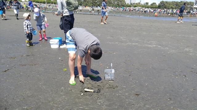 ふなばし三番瀬海浜公園の潮干狩りでは、やどかりなどの小さな生き物もたくさん見つかります。