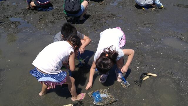ふなばし三番瀬海浜公園の潮干狩りは子どもたちも大喜びであさりを取ります。