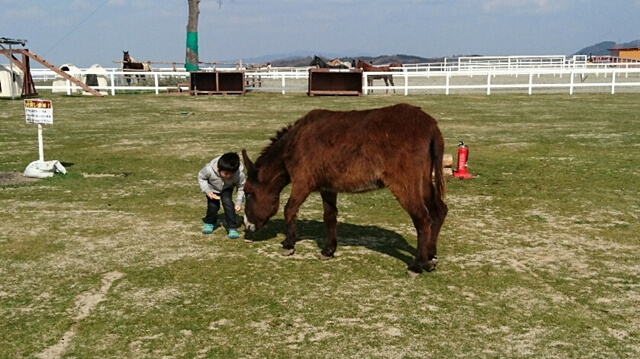 ふれあい牧場では子供も動物たちと楽しく遊ぶことができます。